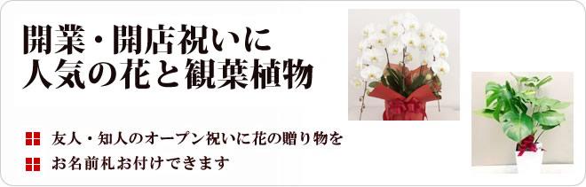 企業 会社 開業・開店祝いに人気の花と観葉植物